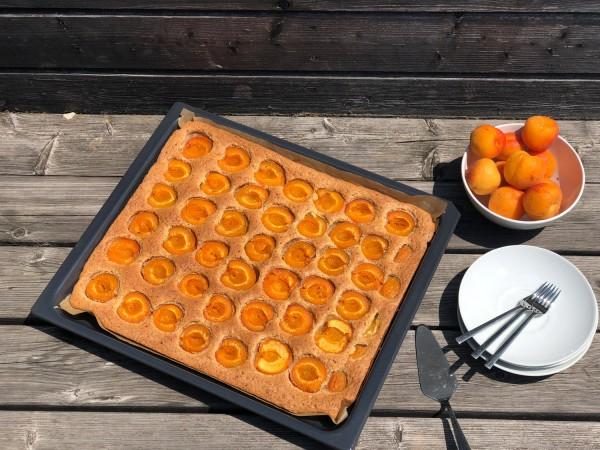 Marillen-Nuss-Kuchen